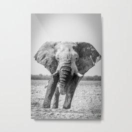 B&W Elephant 5 Metal Print