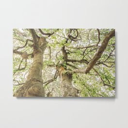 Intertwining Upward Metal Print