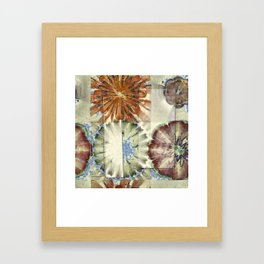 Autogenic Form Flowers  ID:16165-150817-31621 Framed Art Print