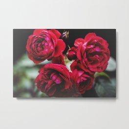Red Red Roses Metal Print