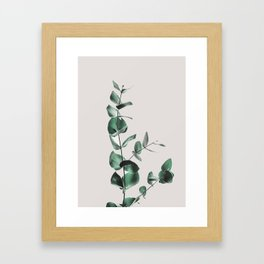 Eucalyptus Gerahmter Kunstdruck