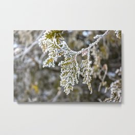 Frost covered tree leaves Metal Print