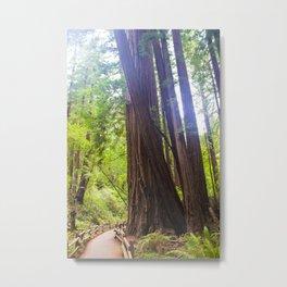 Muir Woods Path Metal Print