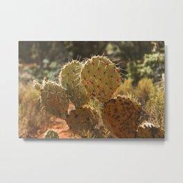 Cactus 01 Metal Print