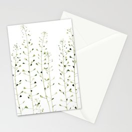 Thlaspi Stationery Cards