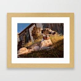 Wonder Whippet Photograph Framed Art Print