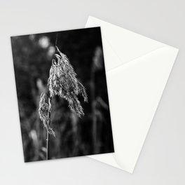 Phragmites Australis Stationery Cards