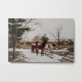 Wild Horses in the Snow Metal Print