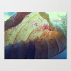 Untitled VII Canvas Print