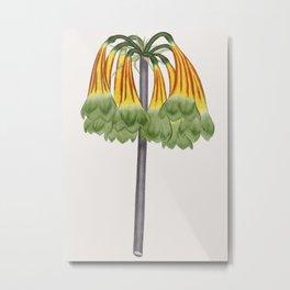 Cyrtanthus Metal Print