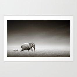 Elephant with zebra Art Print