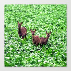 deers in the field. Canvas Print