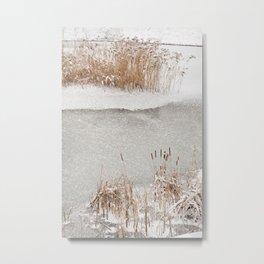 Typha reeds winter season Metal Print