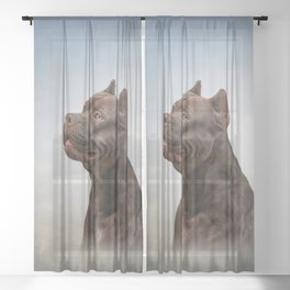 American Staffordshire Terrier 5 Sheer Curtain