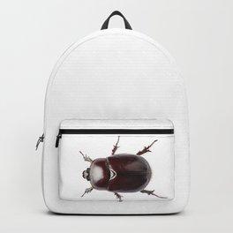 """European rhinoceros beetle female """"Oryctes nasicornis"""" species Backpack"""