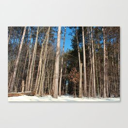 Woods in Winter Canvas Print