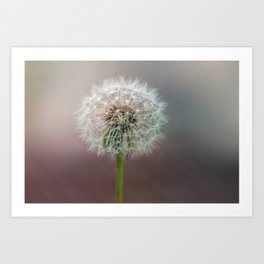 Moment of tranquility Art Print