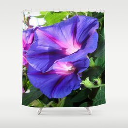 A Pair of Vibrant Morning Glories In Full Bloom Shower Curtain
