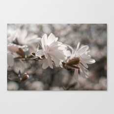 Magnolia Dreaming Canvas Print