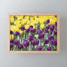 Tulips in Royal Botanical Gardens Burlington Canada Framed Mini Art Print
