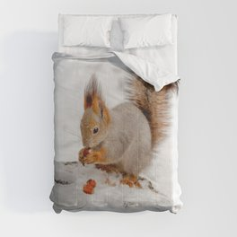 Happy winter morning! Comforters