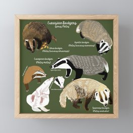 Badgers Meles Genus Poster Framed Mini Art Print