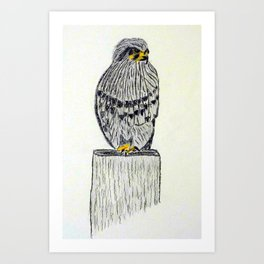 Fine Art New Zealand  Falcon in Graphite and Charcoal on 300 gsm  Art Print