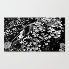 fungi explosion Canvas Print