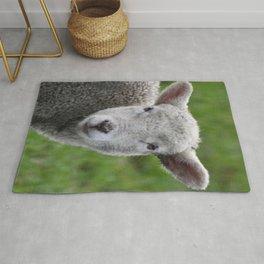 Lamb Stare Rug