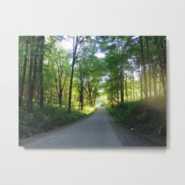 Tree Lined Country Road Metal Print