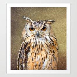 Indian Eagle Owl Art Print