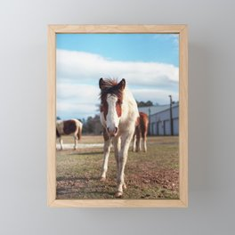 Chincoteague Pony with Blue Eyes - Film Photograph taken in Virginia Framed Mini Art Print