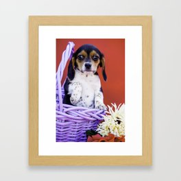 Tricolor Beagle Puppy Holding up Her Paw in a Purple Basket with Flowers in Front of Red Background Framed Art Print