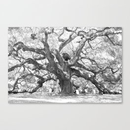 The Angel Oak - Charleston, South Carolina Canvas Print