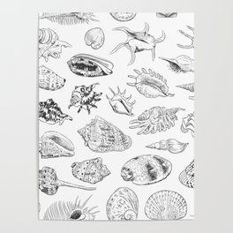 collection of sea shells, black contour on white background Poster