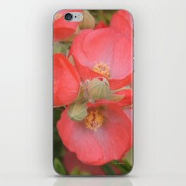 Apricot Mallow Blossoms iPhone Skin