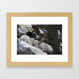Sparrow on a rock Framed Art Print