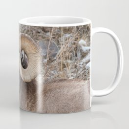 Bighorn sheep eating with grass in mouth in Yellowstone National Park Coffee Mug