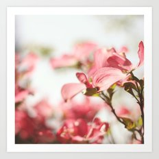 Dogwood Daydreams Art Print