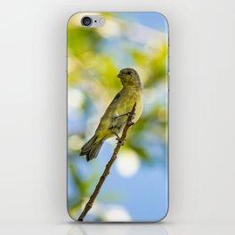 Yellow Bird - I iPhone Skin