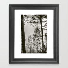 Into the woods VIII Framed Art Print