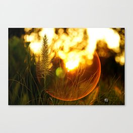 The Beauty of Fall ~ Series I Canvas Print