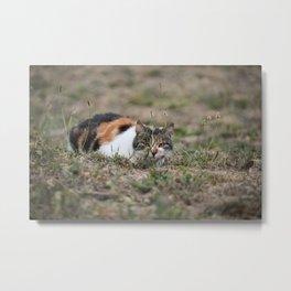 Multicolor cat is playing hide and seek Metal Print