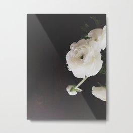 Ranunculus.  Metal Print