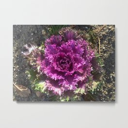 Getty Villa Garden Malibu  Purple Plant Metal Print