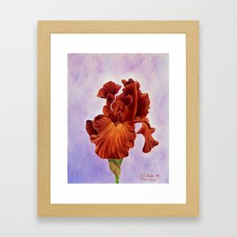 Dutch Chocolate Iris Framed Art Print