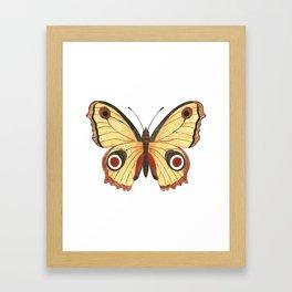 Juno Butterfly Illustration Framed Art Print