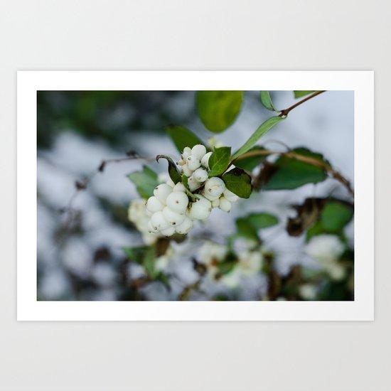 Snowberry IV Art Print
