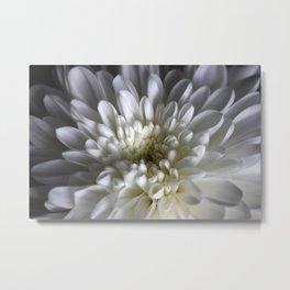 White Aster Metal Print