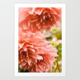 Collaboration - Modern Botanical Dahlia Flower Photograph -pink terracotta floral Art Print